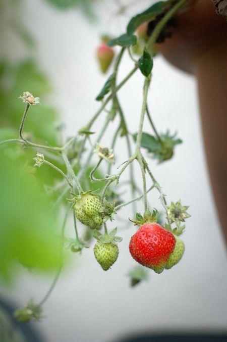 Harvest 4